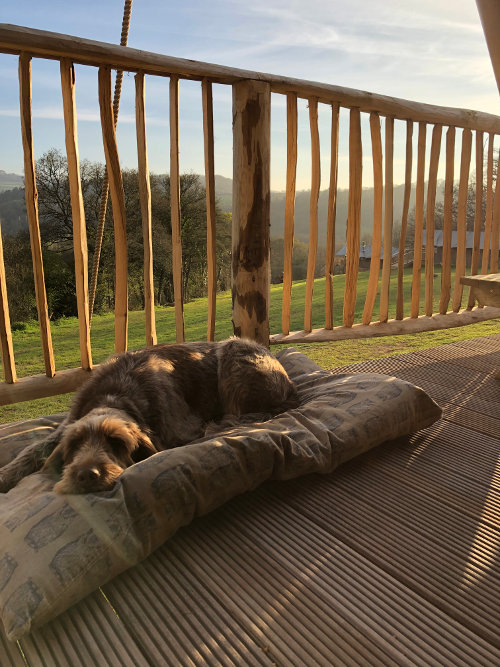 Dog friendly glamping at Exe Valley in Mid Devon